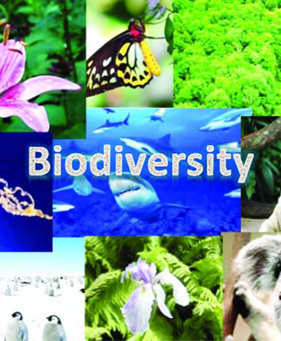 BIODIVERSITY CONSERVATION AMID COVID-19